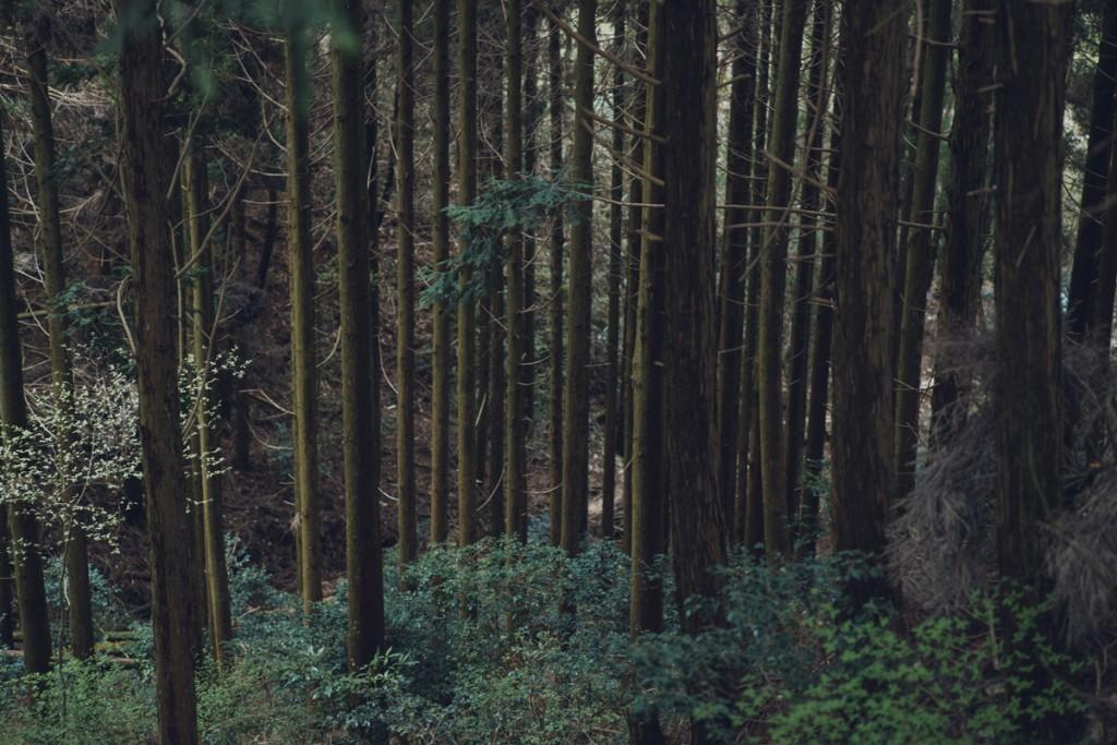 はじめての一鍼堂。 森について